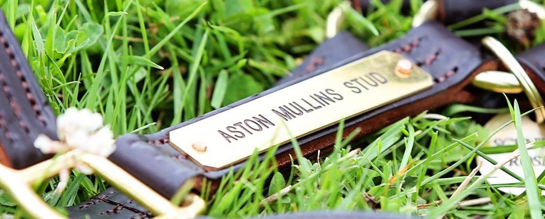 Aston Mullins Stud